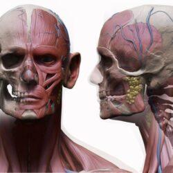 دانلود مدل سه بعدی آناتومی مرد