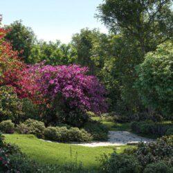 دانلود 60 آبجکت گل و گیاه از Maxtree – کالکشن 32