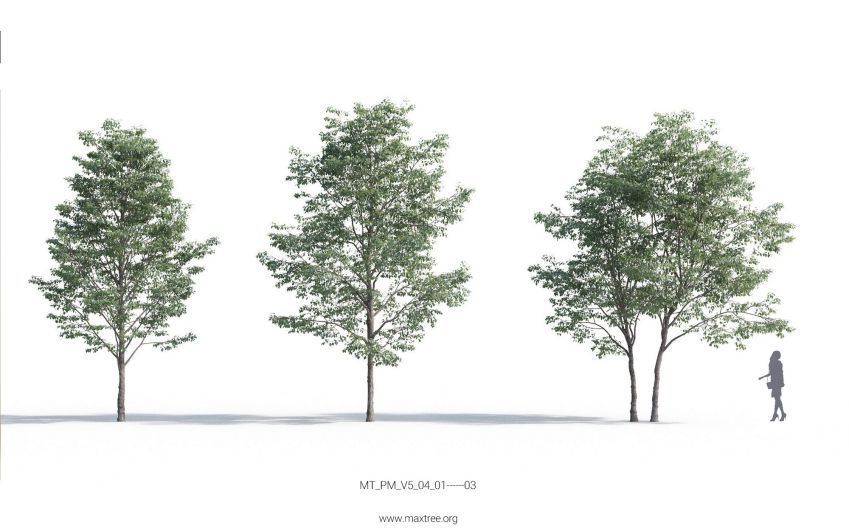 دانلود 54 آبجکت درخت