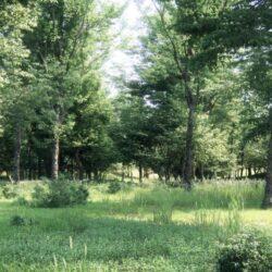 دانلود 54 آبجکت درخت از Maxtree – کالکشن 5