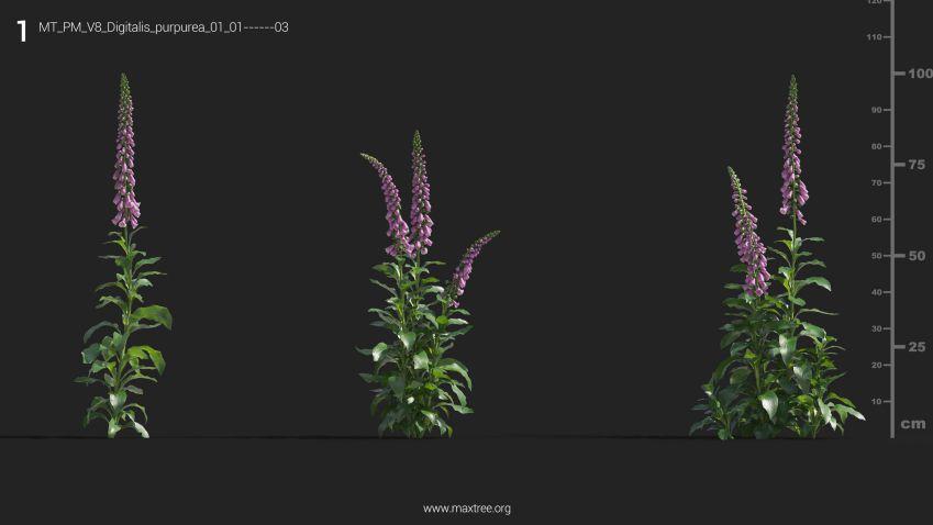 دانلود 84 آبجکت گل و گیاه