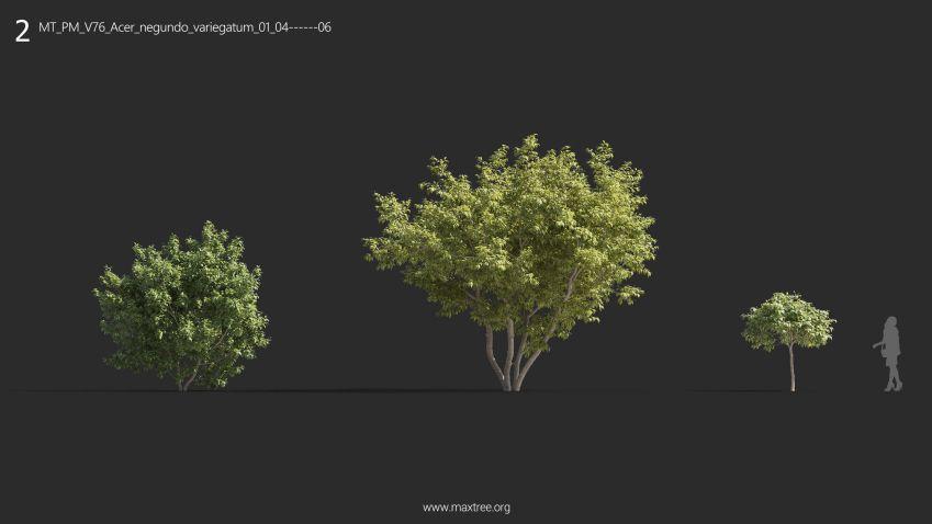 دانلود 72 مدل سه بعدی درخت