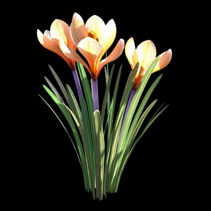 دانلود آبجکت گل