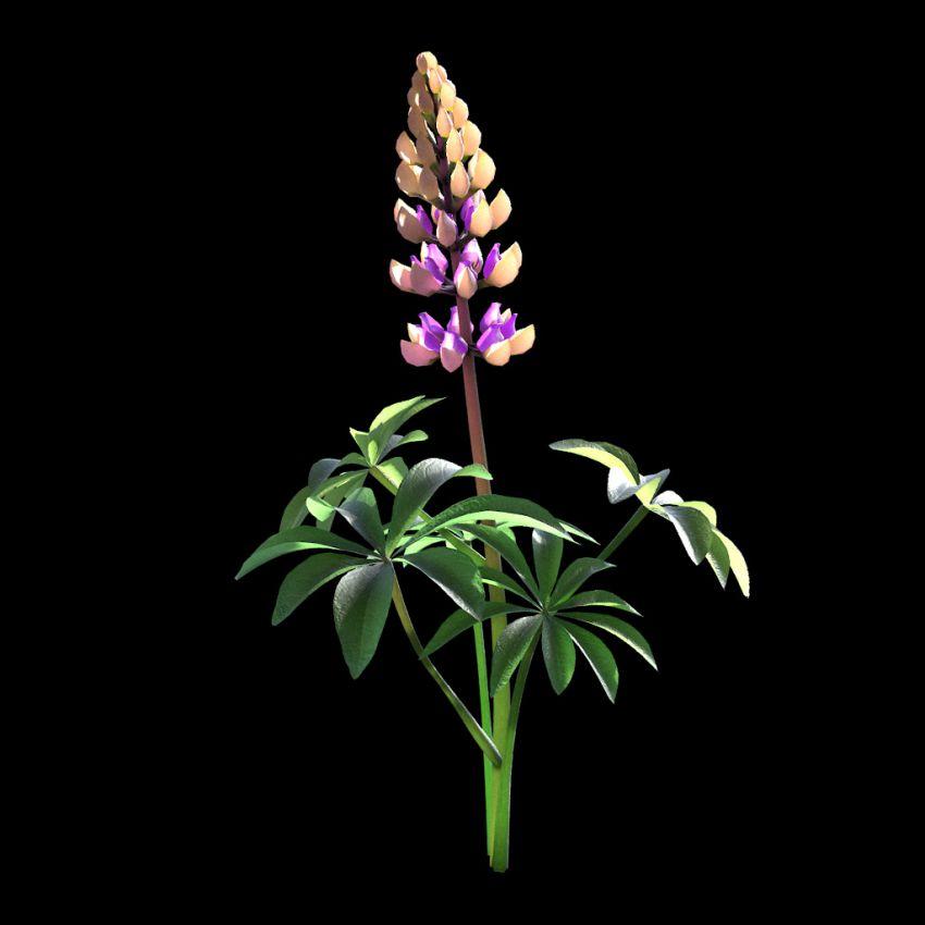 مدل سه بعدی گل های واقعی