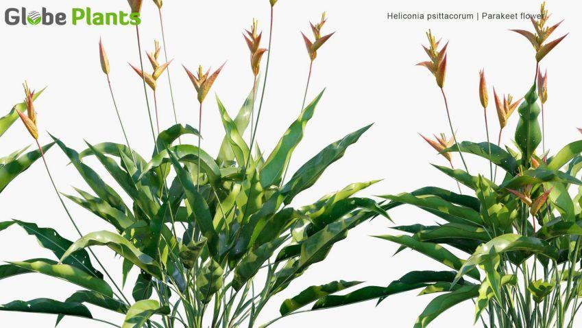 آبجکت گل و گیاه گرمسیری