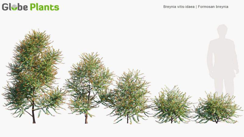مدل سه بعدی گیاهان گرمسیری