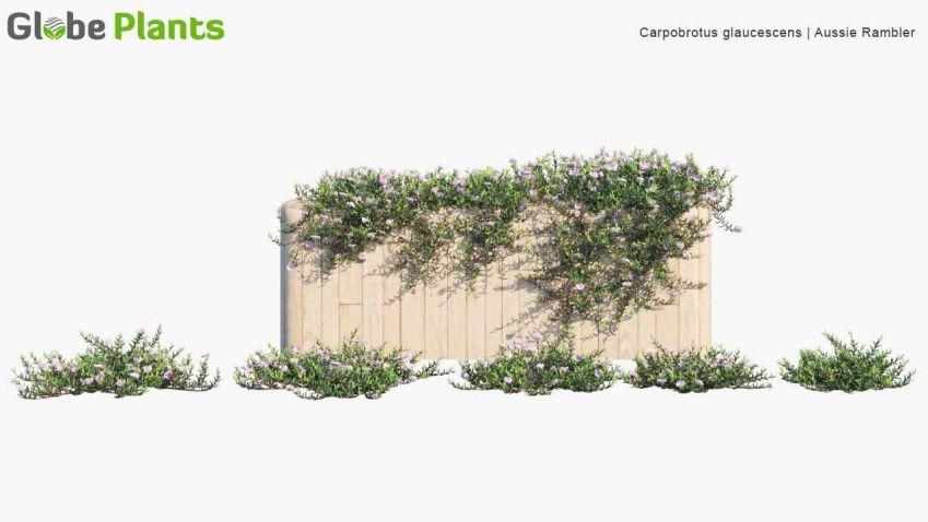 مدل سه بعدی درخت انگور و پیچک