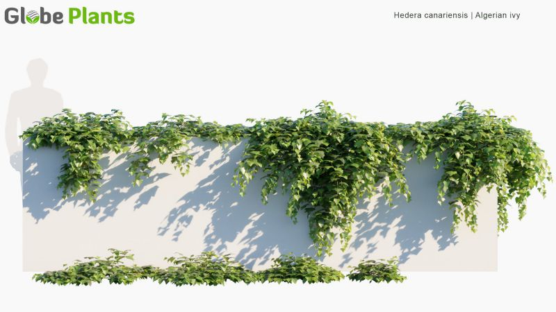 مدل سه بعدی درخت مو